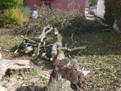 uhadzane-napilene-drevo-po-spileni-stromu-pripravene-k-odvozu-drevnej-hmoty-safeworks.sk