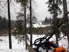 7.spileny-strom-a-priprava-druheho-stromu-na-spilenie-a-nasledne-smerovanie-kontrolovaneho-padu-stromu-za-pomoci-lanovej-techniky-a-arboristickej-