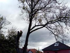 rizikove-spilovanie-stromu-orech-za-pomoci-vyskovych-prac-astromolezeckych-stupaciek-edelrid-talon-a-motorovej-pily-stihl-MS193T-safeworks.sk