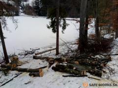 12-napilena-a-rozriedena-drevna-hmota-z-rizikovych-stromov-safeworks.sk