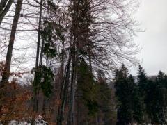 2-naklonene-stromy-nad-vodnou-hladinou-s-prehnitymi-kmenmi-bezpecne-spilenie-safeworks