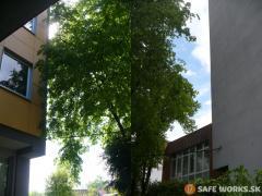 opilenie-konarov-ktore-zasahovali-do-steny-budovy-safeworks.sk