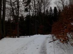 5-natiahnutie-lana-cez-kladku-na-bezpecne-stahovanie-stromov-od-vodnej-hladiny-proti-prirodzenemu-tazisku-stromu-safeworks.sk