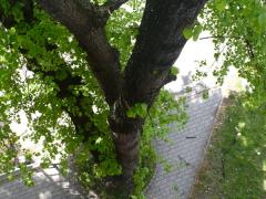 odpilenie-vetiev-stromu-poskodzujuce-fasadu-budovy-safeworks.sk